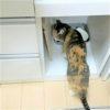 【食器棚をプチDIY】狭小住宅でもペットスペースを!カップボードの扉を外してキッチンの一部に猫の食事スペースとネコトイレの置き場を作りました。