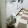 6歳長男が「くさいくさい」と鼻をつまむキッチン。敷き詰めていたジョイントマットを恐る恐る3年ぶりにはがしてみました。