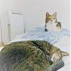 【猫風邪の治療】猫の鼻水とくしゃみが長引く。動物病院で診察と薬を処方されました。猫風邪の治療費はいくらになったか?